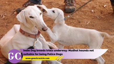 Indie Dog breeds trials underway: Mudhol hounds not suitable for being Police Dogs